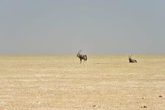 Etosha Salt Pan - Namibia royalty free stock image