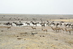 Etosha Waterhole landskap Arkivfoto