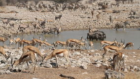 Etosha waterhole stock video footage
