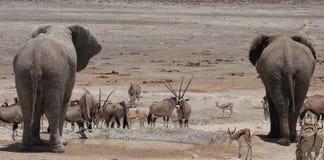 Etosha Wateringhole Stock Image