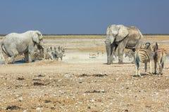 Etosha zebr słonie Zdjęcia Royalty Free