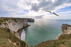 Etretat coastline and a seagull Stock Photo