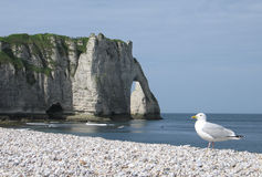 Etretat in Normandy Stock Images