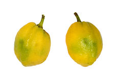 Etrog Royalty Free Stock Image