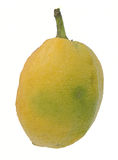 Etrog green Stock Images