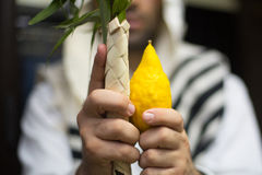 Etrog, lulav, adaasa, arava. Jewish holiday of Sukkot, 4 species of plants to fulfill the commandments Royalty Free Stock Photography