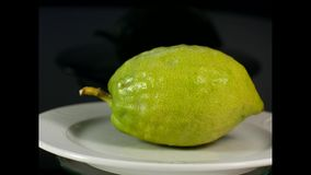 Etrog ritual fruit. A round view of the fruit Etrog, which is one of the main symbols of the Sukkot holiday, is the Hebrew name for the citron fruit of the stock footage
