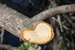 ettårig växt ringer treen Arkivbild