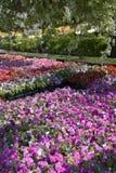 ettårig växtskärm Fotografering för Bildbyråer