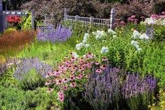 Ettårig växtträdgård Arkivfoton