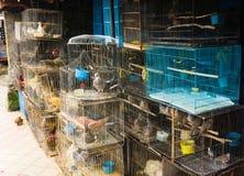 Ett älsklings- shoppar sälja den olika sorten av fåglar i burfotoet som tas i Depok Indonesien Royaltyfri Bild