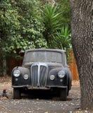 Ett övergett klassiskt medel rostar under trädet i Belmont royaltyfri foto