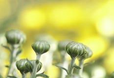Ett övre fotografi för slut av blommaknoppar Arkivbilder