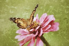 Ett antiqued fotografi av en målad dam Butterfly Royaltyfria Bilder