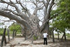 Ett baobabträd trodde för att vara omkring 500 gamla år på delftfajansön i den Jaffna regionen av nordliga Sri Lanka Arkivbild