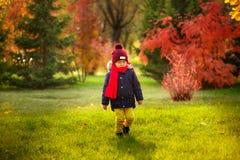 Ett barn går i hösten i parkera - ett barn går i aet royaltyfri bild