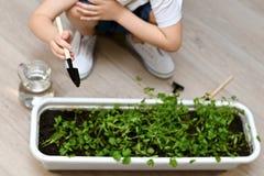 Ett barn med en spatel att bry sig för gräsplaner i krukor arkivbilder