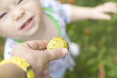 Ett barn trycker på en taggig kastanj och grimaser Arkivfoton