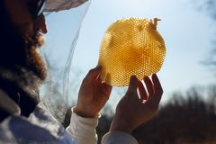 Ett beekeeperinnehav och undersöker ett fragment på den tomma honungskakan på solhimmelbakgrund Horisontalutvändigt skott arkivfoton