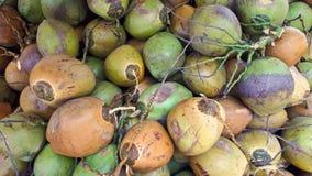 Ett berg med flera kokosnötter i olika färger royaltyfri bild