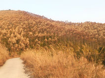 Ett berg mycket av den härliga växten och hopp arkivfoton