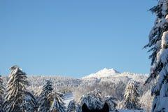 Ett berg som stiger upp från träd royaltyfri bild