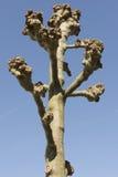 Ett beskurit träd royaltyfri fotografi