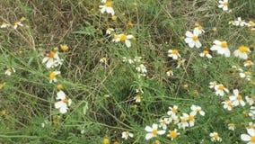 Ett bi bland blommor stock video