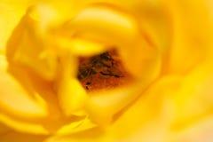 Ett bi i gulingros Royaltyfria Bilder