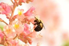 Ett bi på en blomma Arkivbild
