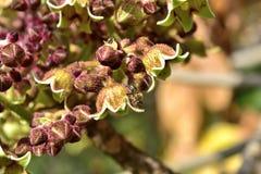Ett bi som gör dess arbete Royaltyfri Fotografi