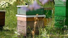 Ett bihus är en bikupa stock video
