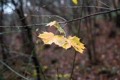 Ett blad i nedgången som omges av träd och naturen Royaltyfria Bilder
