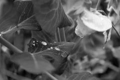 Ett blad med droppar av regn Arkivbild