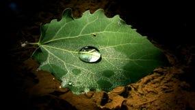 Ett blad som svävar på vattnet Arkivfoto