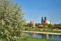 Ett blommande träd vid floden och tornen av den gotiska cathedraen Royaltyfri Fotografi