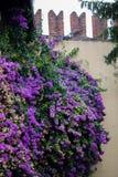 ett blomstra träd nära en tegelstenvägg royaltyfri fotografi
