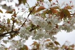 Ett blomstrat träd Royaltyfria Foton