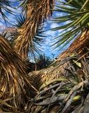 Ett brunt kattnederlag i palmträd royaltyfria bilder