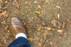 Ett brunt läder skor royaltyfri fotografi