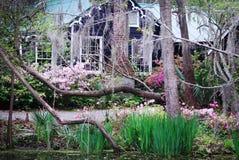 Ett charma hem som omges vid våren, blommar på magnoliakolonin i charleston Arkivbild