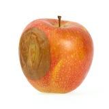 Ett dåligt rött äpple arkivfoton