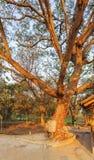 Ett dödträd som dödar fältet Choeng Ek, förorter Phnom Penh, Cambodja fotografering för bildbyråer