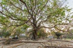 Ett dödträd som dödar fältet Choeng Ek, förorter Phnom Penh, Cambodja royaltyfri fotografi