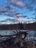 Ett dött träd som klibbar in i sjön Royaltyfria Foton