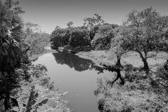 Ett damm i indisk by royaltyfria foton