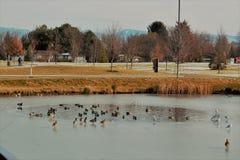 Ett damm inom ett damm på Julius M Minnes- Kleiner parkerar i Boise Idaho Royaltyfri Foto