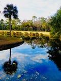 Ett damm längs en golfbana i Hilton Head arkivfoton