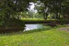 Ett damm på parkera Arkivbild