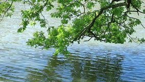 Ett damm på våren stock video